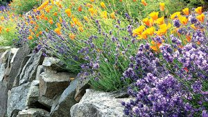 Natural Bug Repellent Plants And Their Essential Oils