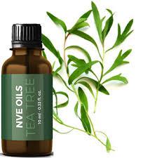 tea tree aromatherapy benefits, tea tree soap benefits, tea tree soap bar benefits, tea tree soap benefits skin, tea tree oil bar soap benefits, tea tree oil benefits acne,